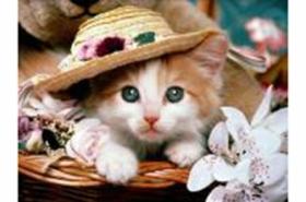 Набор для вышивания крестиком 40*50 см (полн. заполн,канва с рис.) Котёнок в шляпке XA2231