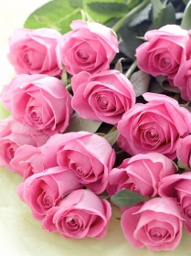 Холст с красками по номерам 22х30 см. Роскошный букет роз (Арт. HS250)